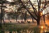 AFW 37 MH0004 01
