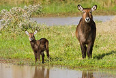 AFW 37 RW0001 01
