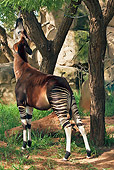 AFW 44 MH0002 01