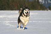 DOG 01 RK0098 09
