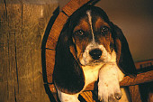 PUP 01 RK0032 05