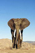 ELE 01 RK0017 03