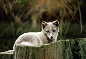ARC 01 BA0001 01