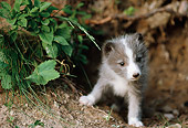ARC 01 BA0002 01