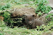 ARC 01 BA0003 01