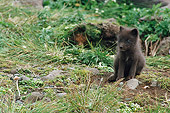 ARC 01 BA0004 01