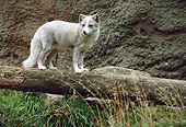 ARC 01 BA0005 01