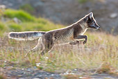 ARC 01 KH0006 01