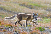 ARC 01 KH0007 01