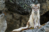 ARC 01 KH0014 01