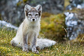 ARC 01 KH0015 01