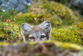 ARC 01 KH0016 01