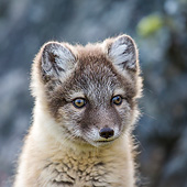 ARC 01 KH0025 01