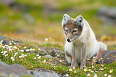 ARC 01 SK0009 01
