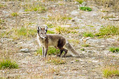 ARC 01 SK0010 01
