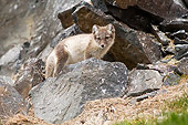ARC 01 SK0011 01
