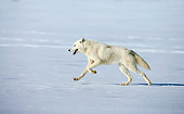 ARC 01 WF0003 01