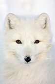 ARC 01 NE0001 01