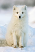 ARC 01 NE0002 01