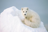 ARC 01 NE0003 01
