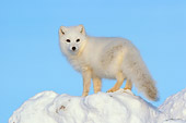 ARC 01 NE0004 01