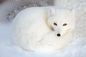 ARC 01 NE0006 01