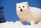 ARC 01 RK0001 02