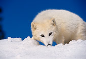 ARC 01 RK0001 06
