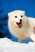 ARC 01 RK0002 04