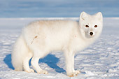 ARC 01 SK0001 01