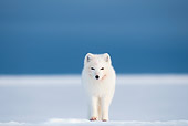 ARC 01 SK0002 01
