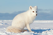 ARC 01 SK0003 01