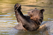 BEA 01 AC0007 01