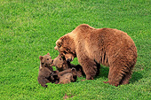 BEA 01 AC0008 01