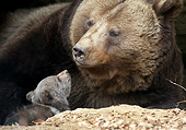 BEA 01 AC0015 01