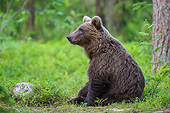 BEA 01 AC0026 01