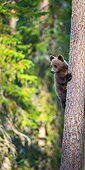 BEA 01 AC0029 01