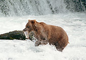 BEA 01 GL0007 01