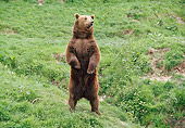 BEA 01 GL0010 01