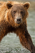 BEA 01 MC0002 01