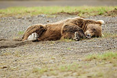 BEA 01 MC0005 01