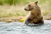 BEA 01 MC0008 01