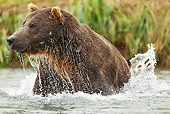 BEA 01 MC0017 01