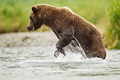 BEA 01 MC0018 01