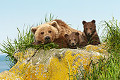 BEA 01 NE0054 01