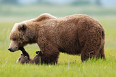 BEA 01 NE0055 01