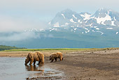 BEA 01 NE0056 01