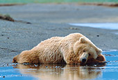 BEA 01 NE0058 01