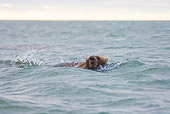 BEA 01 SK0001 01