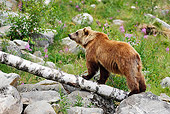 BEA 01 WF0003 01